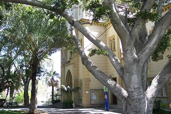 31 Il Parque Viera y Clavijo a Santa Cruz