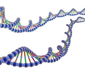 canarie-dna-patrimonio-genetico