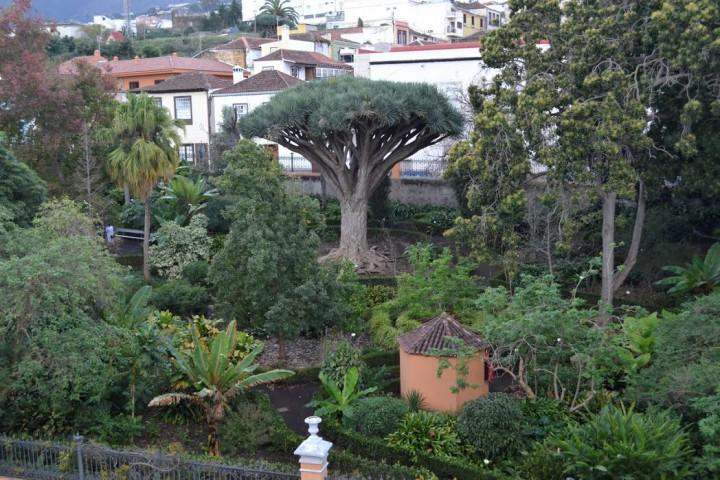 La Hijuela il giardino botanico di La Orotava