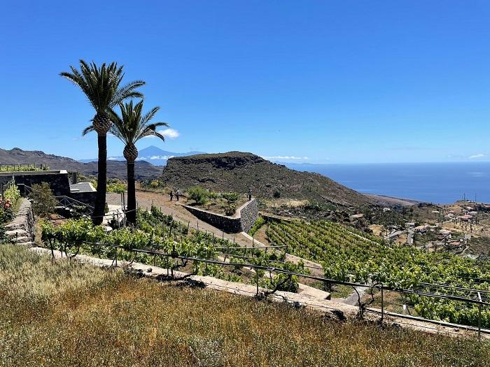 21-La-Gomera-tra-viticoltura-eroica-e-Forastera-Gomera