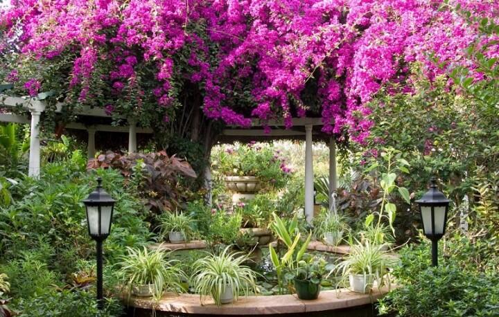 giardino-little-puerto-de-la-cruz-tenerife-4